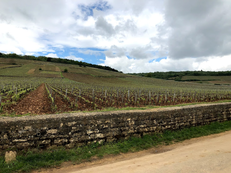 ワイン旅2 ロマネ・コンティの畑2