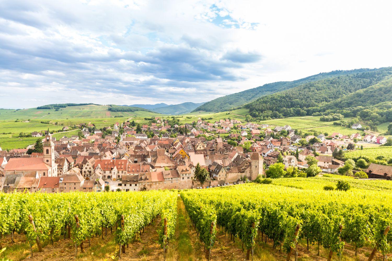 アルザスのワイン畑