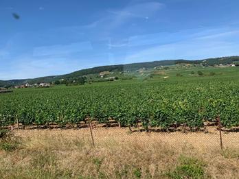 ジュヴレ・シャンベルタン村の畑