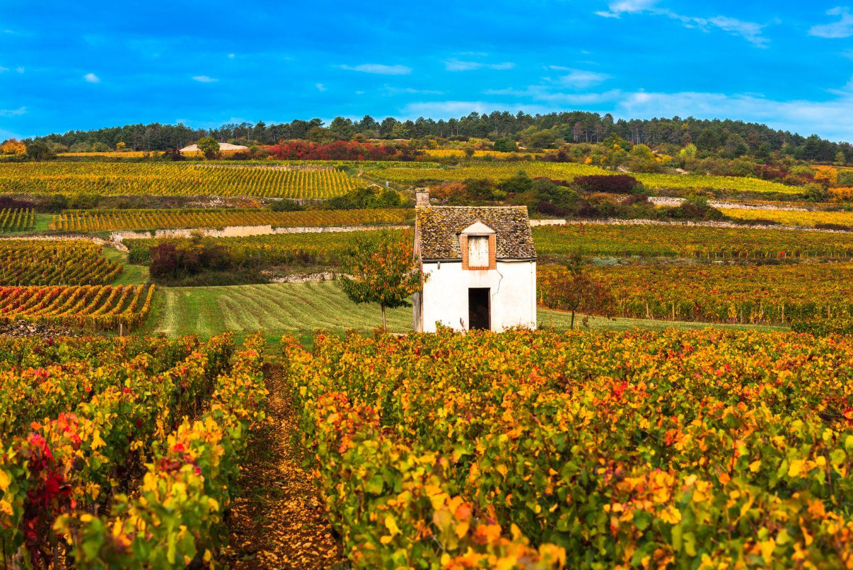 ブルゴーニュのワイン畑、秋