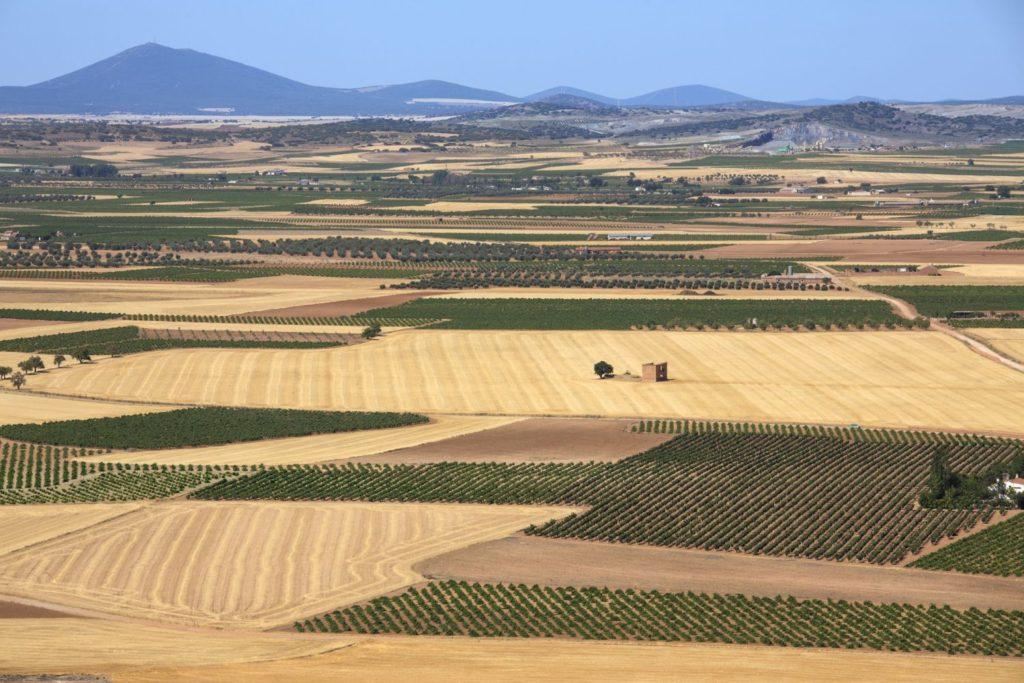 ラマンチャのぶどう畑